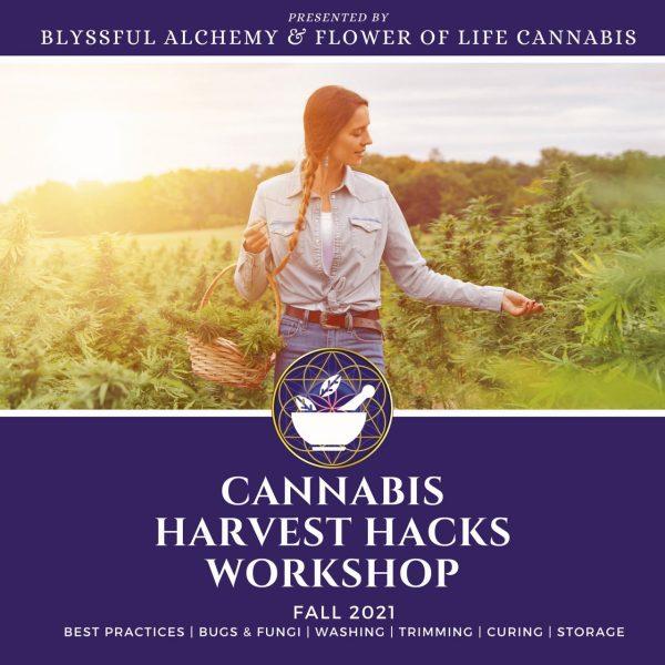 Cannabis Harvest Hacks Workshop Flower of Life Clinics Blyssful Alchemy Fall 2021