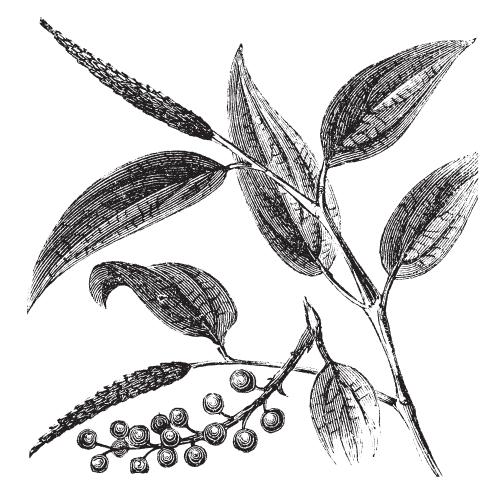 Organic Black Pepper Essential Oil 84929-41-9